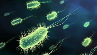 Bacteria on the move